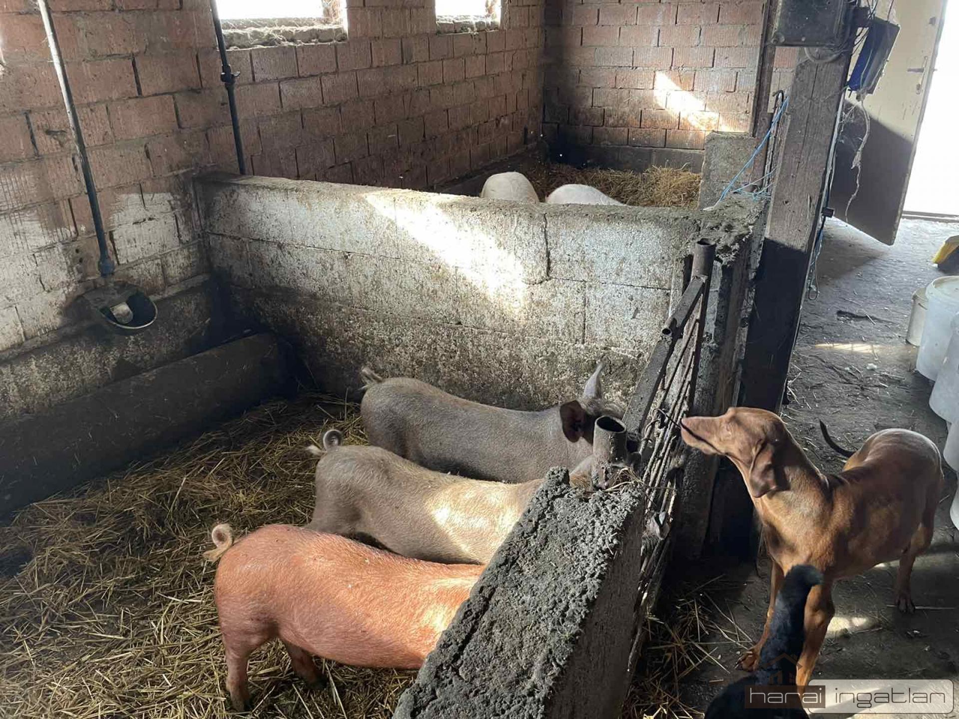 Fülöpjakab Eladó Mezőgazdasági (#01012021185)